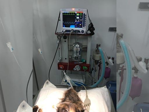 monitor-anestesia-perro