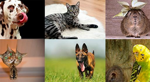 salud-mascotas