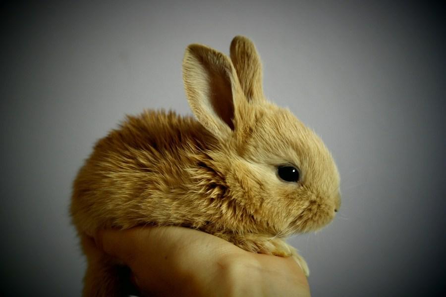cuidados conejo