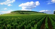 france_burgundy_weinberg_cote_de_nuits2 copia