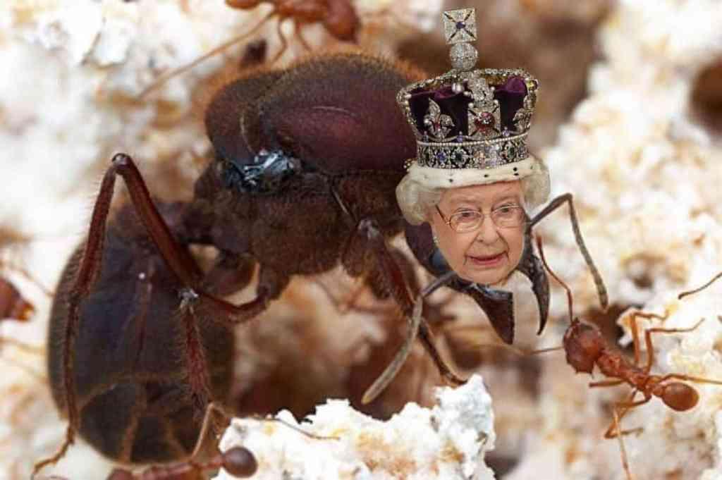 Rappresentazione originale della Regina del gruppo in cui si finge di essere formiche.