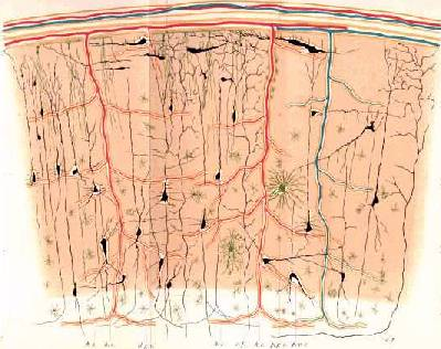 Neuronal Assemblies; the root of consciousness?
