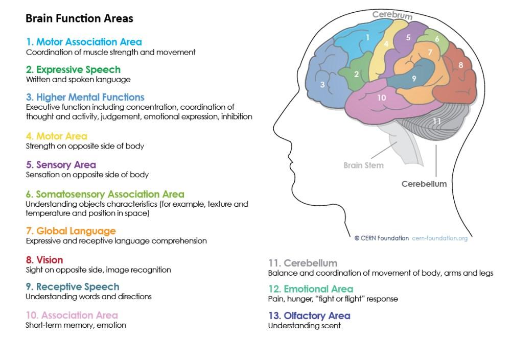 medium resolution of spinal functions