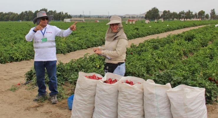 Sunafil fortalecerá inspecciones en el sector agrario