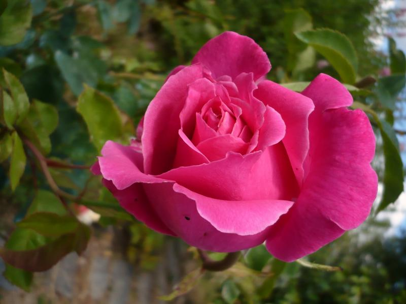 Vie Jones Grace La Rose