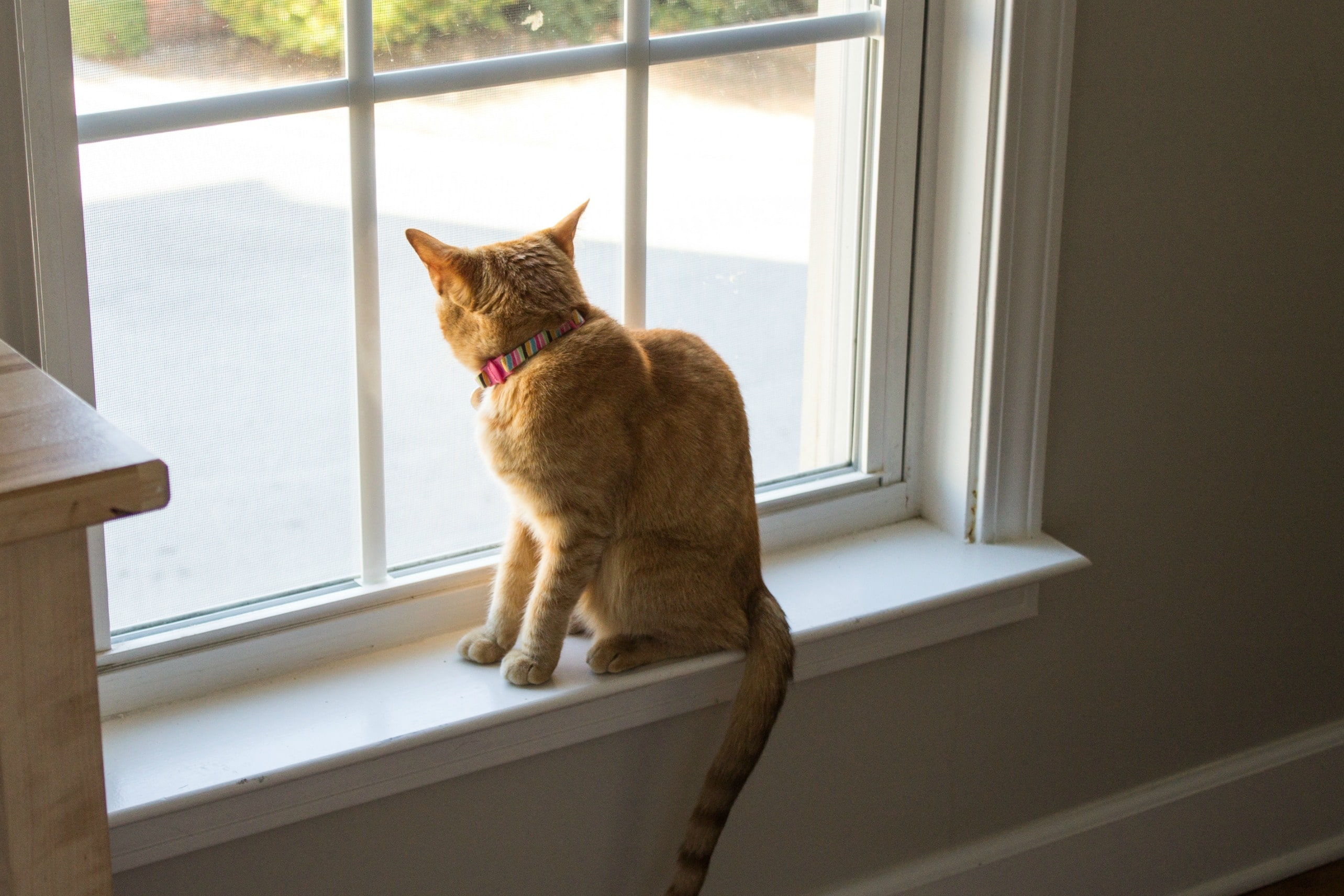 Cat sitting on a window ledge looking out the window