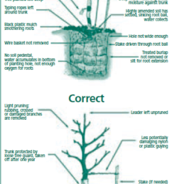 tree planting guide [ 642 x 1478 Pixel ]