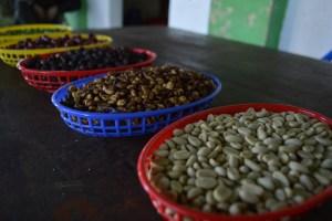 Coop. EL Jabali Comercio Justo El Salvador (11)