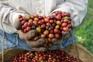 Coop. EL Jabali Comercio Justo El Salvador (111)