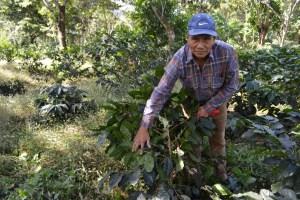 Coop. EL Jabali Comercio Justo El Salvador (150)
