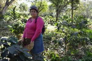 Coop. EL Jabali Comercio Justo El Salvador (155)