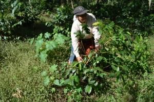 Coop. EL Jabali Comercio Justo El Salvador (29)