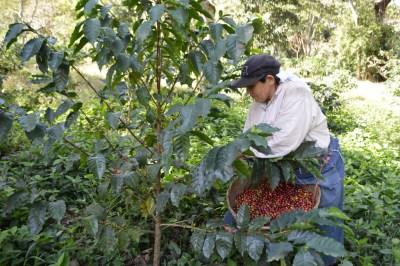 Coop. EL Jabali Comercio Justo El Salvador (41)