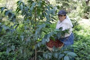 Coop. EL Jabali Comercio Justo El Salvador (42)