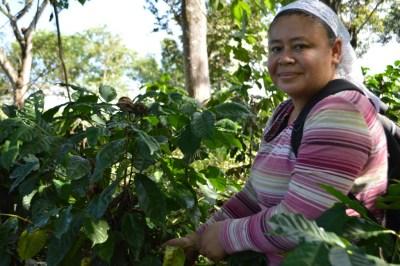 Coop. EL Jabali Comercio Justo El Salvador (93)