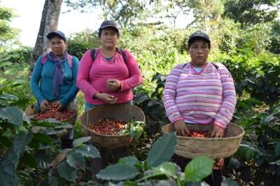 Coop. EL Jabali Comercio Justo El Salvador (120)