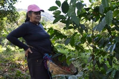 Coop. EL Jabali Comercio Justo El Salvador (64)