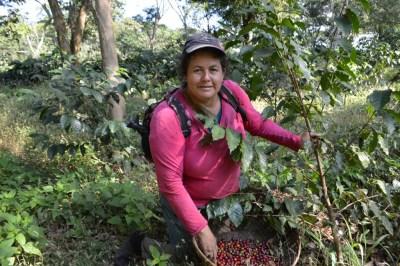 Coop. EL Jabali Comercio Justo El Salvador (76)