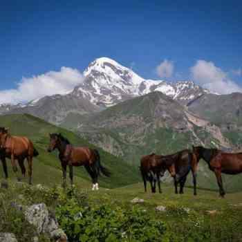 kone-z-kaukazu