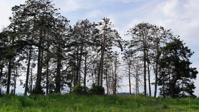 Bulgaristan Batak Gölü Adasındaki Kuşlar  Bulgaristan | Batak Gölü Gezi Rehberi Bulgaristan Batak G  l   Adas  ndaki Ku  lar