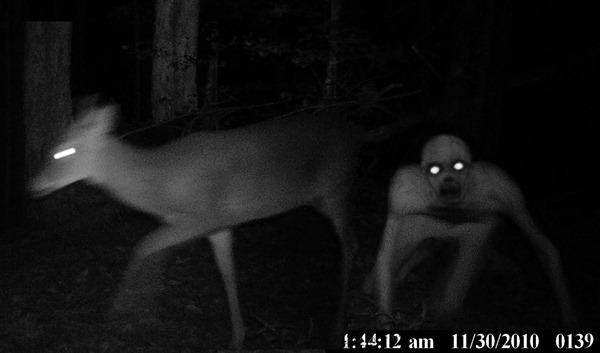 monster_deer