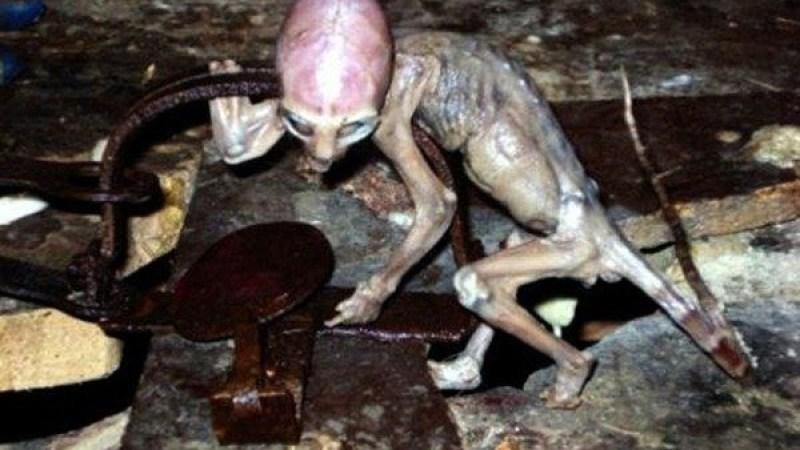 A Criatura de Metepec: Autor confessa fraude