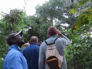 Observacion de primates en Iemberen Guinea Bissau (3)
