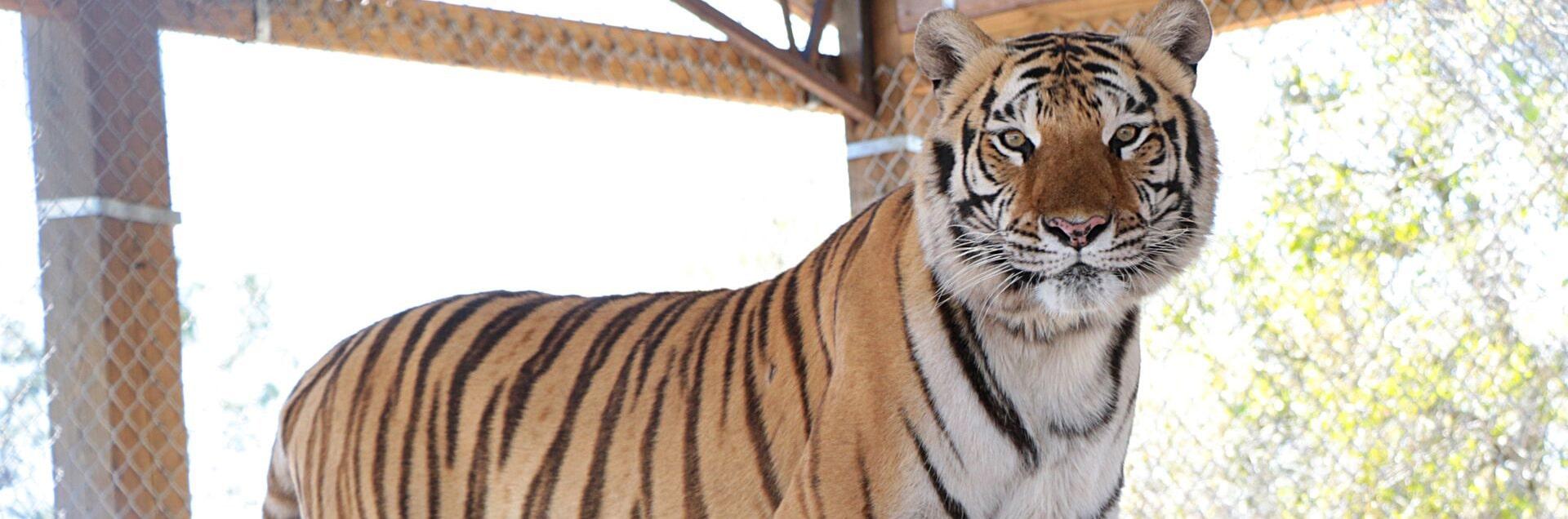 Agro - Central Florida Animal Reserve