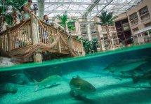 Gaylord Palms Resort - Ultimate Waterpark