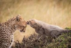 La mia Wildlife, Marco Urso - 04