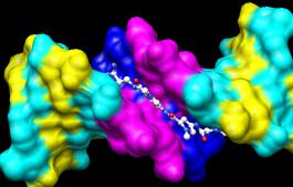permukaan molekul