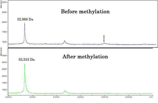 MALDI-TOF analysis of methylated protein