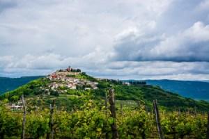 Le vignoble en Istrie