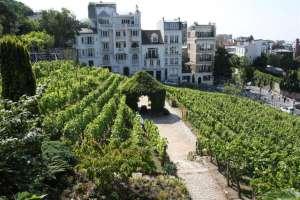 Le vignoble du Clos de Montmartre à Paris