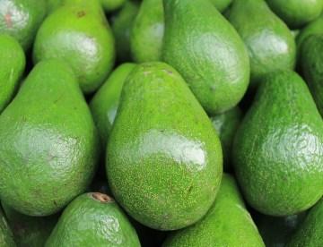 avocado, butter fruit, siddha, alternative health