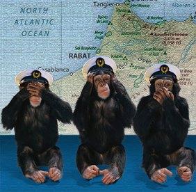 Monkeys-Morocco