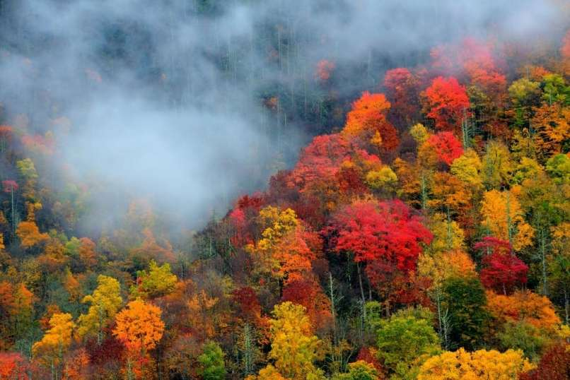 smoky mountains fall colors best time. Black Bedroom Furniture Sets. Home Design Ideas