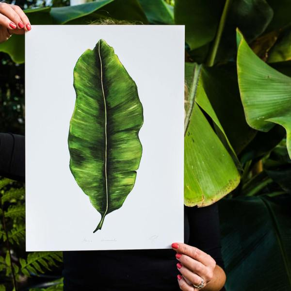 Banana Leaf print Musa Acuminata. Painted, printed and hand finished in Belfast by Dollybirds Art. Printed onto thick 300GSM IPS uncoated art paper. Part of the inspiring Dollybirds Art botanical collection, getting you one step closer to nature.