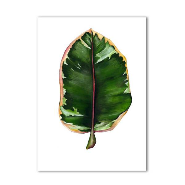Rubber Plant print Ficus Elastica product, signed A3. Painted, printed and hand finished in Belfast by Dollybirds Art. Printed onto thick 300GSM IPS uncoated art paper. Part of the inspiring Dollybirds Art botanical collection, getting you one step closer to nature.