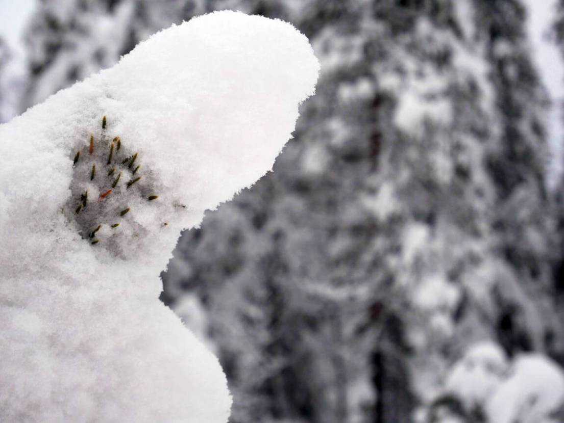 Snow on woodland pine branch, Sweden. Photo by Anna Sjostrom Walton, Chalk & Moss.