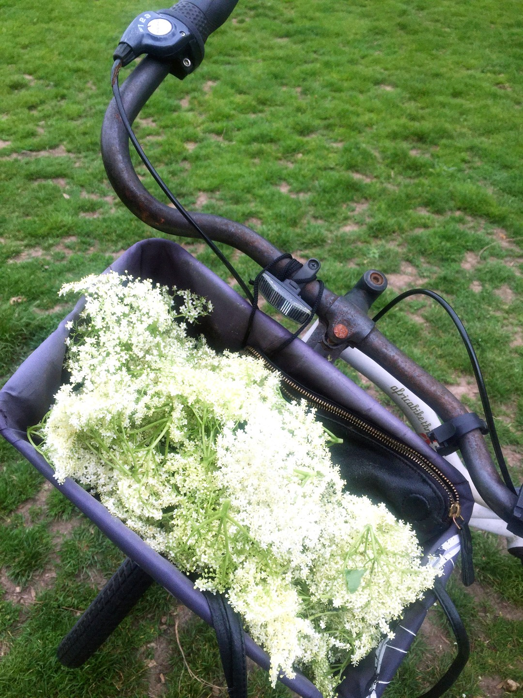 The elderflower tree took us by surprise without my tote bag, so the basket did the job just fine! Homeward bound to get started on making our own elderflower cordial! Make your own with these simple steps: https://www.chalkandmoss.com/how-to-make-elderflower-cordial-easy-refreshing-summer-in-a-bottle/