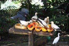 Birds meal @ KL Bird Park