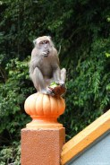 Monkey @ Batu Caves