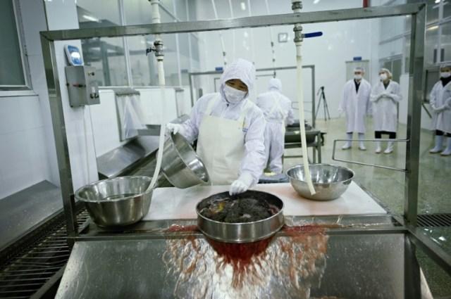 Un employé de la compagnie Kaluga Queen lave des oeufs d'esturgeon, le 12 novembre 2019 (AFP - WANG ZHAO)