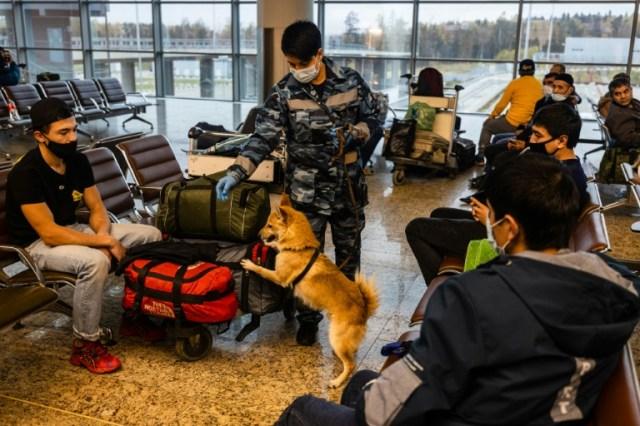 Un chien-chacal entraîné à détecter le coronavirus lors d'un exercice à l'aéroport Sheremetyevo, le 9 octobre 2020 à Moscou (AFP - Dimitar DILKOFF)