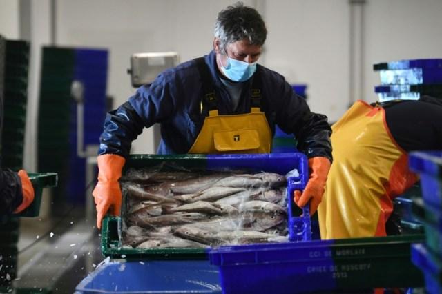 Du poisson est déchargé le 12 novembre 2020 à Roscoff, en Bretagne (AFP/Archives - Fred TANNEAU)
