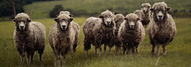 Do We Take care of the Sheep or Do We Use the Sheep?