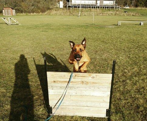 Träningsprogram för hund och människa inför en längre fjällvandring