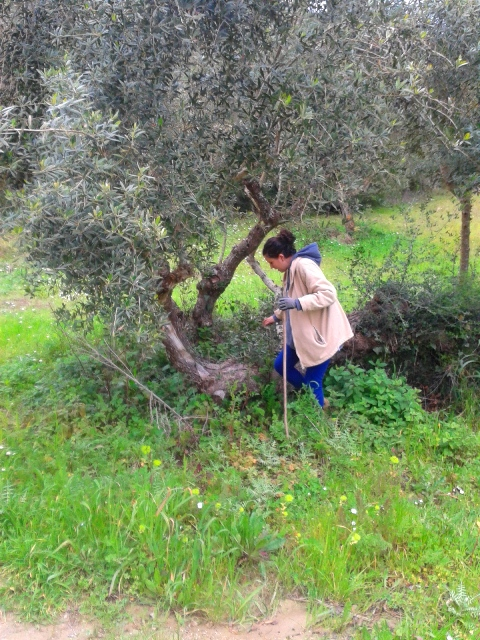 chamaloni-nature-agrotourism-activities
