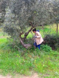 chamaloni-nature-agrotourism-activities